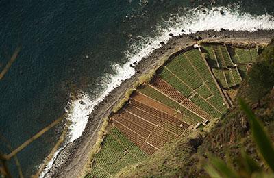 Weinstöcke vor der Küste Madeiras