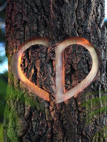 CD Logo in Baum geritzt